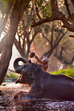 I remember seeing this at an elephant market somewhere in India. I wish I could remember where.(by Arkom Pimsarn)