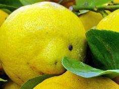 Mal di stomaco, nausea, cattiva digestione? Ci pensa il giallo canarino!