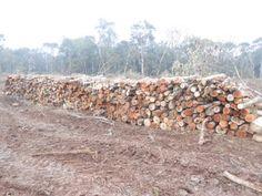 No Dia Mundial do Meio Ambiente, foram localizadas duas áreas de destruição de floresta em estágio avançado de regeneração em Rio Azul de Cima e Palmeirinha