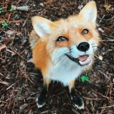 """""""The sun shines right through her eyes, straight to her heart, and when she looks at me I melt."""" #thehappiestfox"""