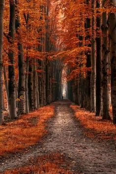 2 to 1 to 3 by Lars van de Goor - Photo 129519775 - Beautiful World, Beautiful Places, Beautiful Pictures, All Nature, Amazing Nature, Fall Pictures, Nature Pictures, Landscape Photography, Nature Photography