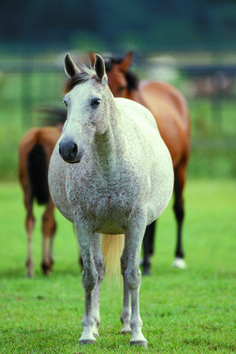 Get your mare ready for baby with this horse-foaling checklist.