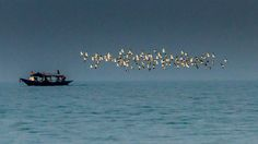 Birds in Sync by Gyanendu Sahoo on 500px