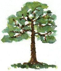 http://painting.about.com/od/landscapes/ss/paint_trees.htm