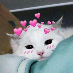 Cauuute kittens cutest, dog cat, cat hug, i love cats, cute cats Cute Cat Memes, Cute Animal Memes, Cute Love Memes, Cute Animals, Cute Baby Cats, Cute Kittens, Meme Chat, Cat Hug, Dog Cat