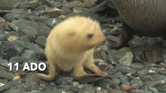 11 Adorable Baby Animals That Will Brighten Your Day: It doesn't get any cuter than this.