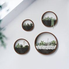 Cheap round vase, Buy Quality vase round directly from China hanging wall vase Suppliers: Creative Wall Hanging Metal Iron Round Vase for Home Garden Living Room Decoration Crafts Artificial Flower Holder Plant Pots Succulent Wall Planter, Hanging Wall Planters, Hanging Succulents, Wall Vases, Wall Terrarium, Terrarium Ideas, Succulent Frame, Metal Planters, Wall Mounted Vase