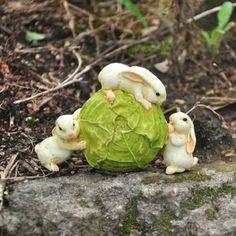 Rabbit Rolling Cabbage