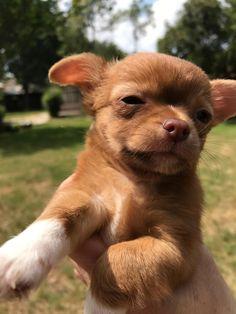 Parents just got a new dog. http://ift.tt/2r3gWZb