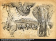 196 HH Big five élephant ©marcello