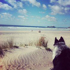 #gwithian #cornwall #beach #sand #dog - @esadkin- #webstagram