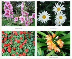 Madeira Flowers - The charm of our flowers - Madeira Flowers - The charm of our flowers - Find cheap hotels and holiday cottages, nature and rural houses, discounts and the right opportunities to