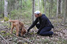Jänisjemma, basset fauve de bretagne, me and my dog, forest