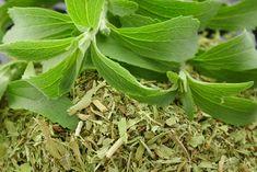 Garden Plants, Herbalism, Plant Leaves, Herbal Medicine