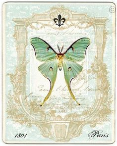 Art Print Vintage Luna Moth