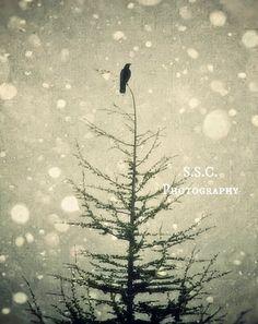Bird Photo. Winter. Art. Snow. Tree. Pine. Redwood. Evergreen, Gray. Black. White. 8.5x11 inch photo. Holiday. Silver. Home decor. wall art. $27.00, via Etsy.