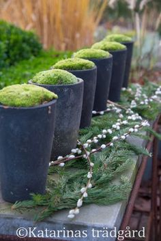 Pots with moss in a row