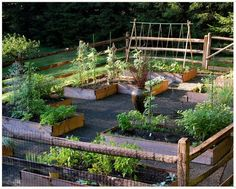 Vegetable garden!