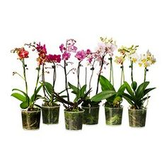 Plants and Plant Pots from £0.65 | Shop at IKEA