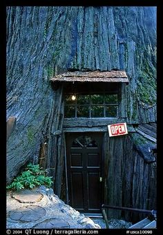 Tree house in California