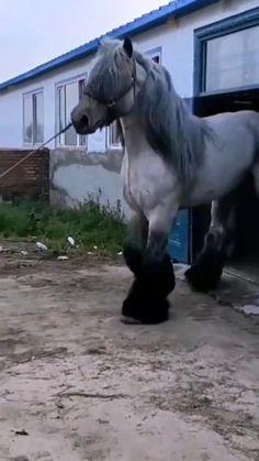 Majestic Animals, Unique Animals, Cute Little Animals, Cute Funny Animals, Animals And Pets, Cute Dogs, Majestic Horse, Big Horses, Cute Horses