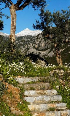 Taygetos mountain, Arcadia and Messenia regions, Peloponnese, Greece Corinth Canal, Greek Flowers, Seasons In The Sun, Forest Mountain, Peaceful Places, Greek Islands, Countryside, Cool Photos, In This Moment