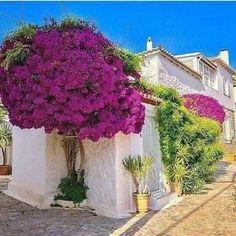 Bougainvillea Tree, Tropical Garden, Amazing Flowers, Flower Beds, Beautiful Gardens, Garden Landscaping, Beautiful Places, Scenery, Backyard