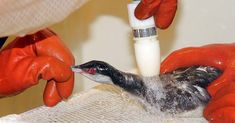 Chemical Pollutants Are Doing More Harm to Birds Than You Think | The Rainforest Site Blog