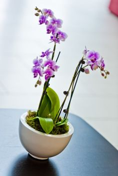 Office Plants Great Pot Tropical For Your Offices Nature At Work