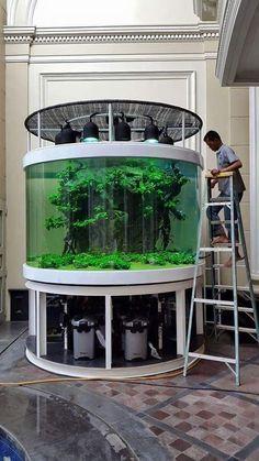 My dream planted aquarium! Cool Fish Tanks, Saltwater Fish Tanks, Aquarium Fish Tank, Aquarium Terrarium, Nature Aquarium, Planted Aquarium, Amazing Aquariums, Shrimp Tank, Aquarium Design