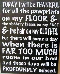 My doggies don't sleep in my bed, but this is still true:)