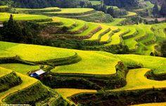 China by Zhang Ning