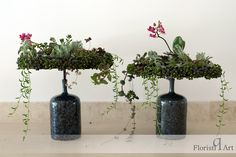 Another way to use your pot plants! Pot Plants, Flower Arrangements, Twins, Succulents, Deco, Floral, Green, Flowers, Design