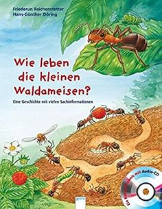 Fabulous Wie leben die kleinen Waldameisen Eine Geschichte mit vielen Sachinformationen Sachbilderbuch