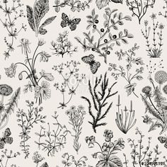 Vektor: Vector vintage seamless floral pattern. Herbs and wild flowers. Botanical Illustration engraving style. Black and white.