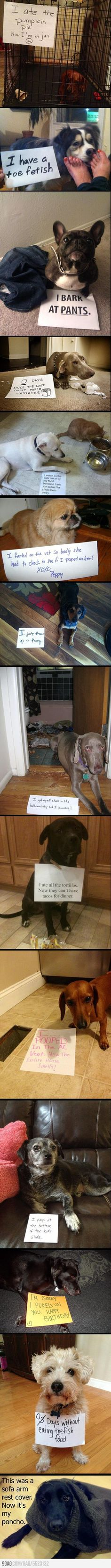 I love LOVE dog shaming.