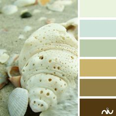 Shells (fauna)