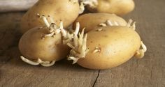 Potatoes can be a delicious food that can be used for countless delicious recipes. Unfortunately, in some cases it can be fatal. If you have potatoes in your home to stand for some time, you may have to throw out. Health Remedies, Home Remedies, How To Store Potatoes, Wie Macht Man, Grow Your Own, Ketogenic Diet, Make It Simple, Herbalism, The Cure