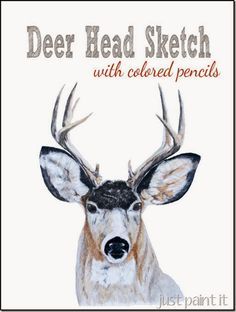 A sketch of a beautiful deer, done with colored pencils.