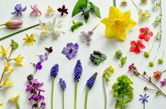 nice kind of blue - garden moodboard - march 2014