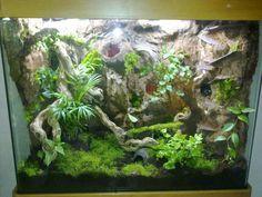 Vivarium, Paludarium, Reptiles, Amphibians, Snake Terrarium, Frog Tank, Frog Habitat, Reptile Room, Poison Dart Frogs