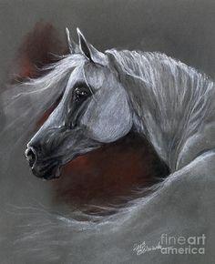 Soft Pastel Art | ... Pastel - Grey Arabian Horse Soft Pastel Drawing 13 04 2013 Fine Art