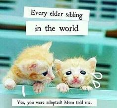 Tag-mention-share with your Brother and Sister 💙💚💛🧡💜👍#siblings #siblinglove