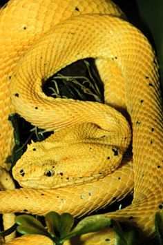 """If you can call a snake """"pretty""""."""