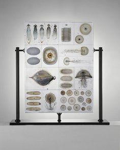 Biological Panel by Steffen Dam