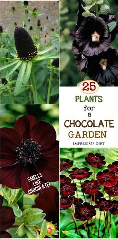 Imagine a garden with the fragrance of a freshly opened box of delicious chocolates! It's not as crazy as it sounds. There are a handful of plants that have a distinct chocolate scent, reminiscent of milk chocolate with a dash of vanilla. Delightful! Come browse the list and get started on your own chocolate-themed garden! #ad