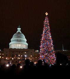 2009 Capitol Christmas Tree