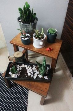 #cactus #home #succulent #nature