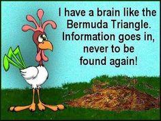 a brain like the bermuda triangle funny quotes quote lol funny quote funny quotes humor