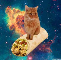 A cat. Riding a burrito. In space. This might be both the most awesome and weirdest thing that I have ever seen.